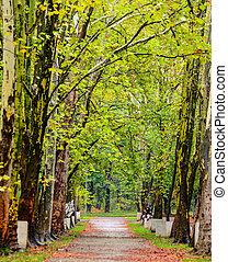 Autumn walk road