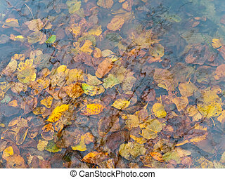 Autumn water and leaves