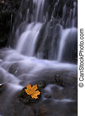 Autumn waterfall with maple leaf