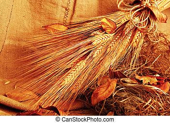 Autumn wheat background