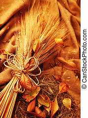 Autumn wheat background