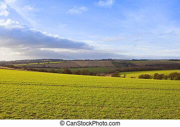 autumn wheat crops