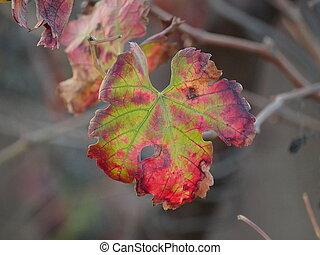 Autumn wine leaf