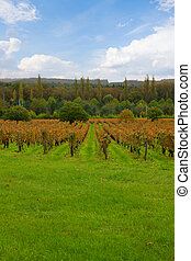 autumn winery rows