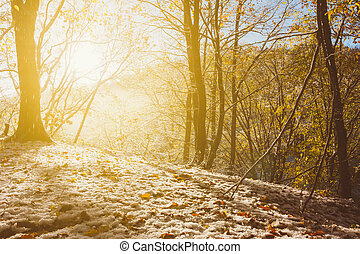 autumn winter landscape, the rays of the rising sun and melts the first snow in the morning autumn forest