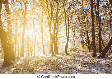 autumn winter landscape, the rays of the rising sun and the first snow in the autumn forest
