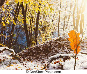 autumn winter landscape, the rays of the rising sun and the first snow in the morning autumn forest