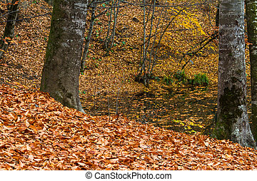 Autumn with Leaves by Lake