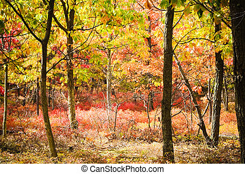 Autumn Wood - scenic colorful woodlands in autumn