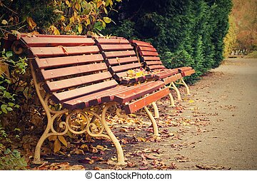Autumn wooden benches