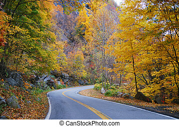 Autumn woods foliage with road