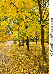 autumn yellow alley