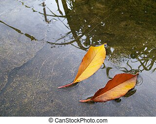 Autumn yellow and brown leaves in a puddle on the ground.