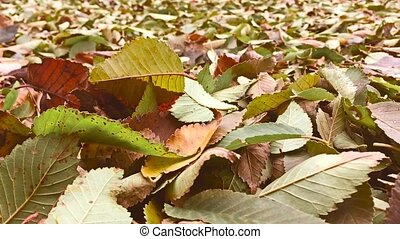 Autumn yellow leaves are on the ground background nature -...
