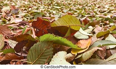 autumn yellow leaves are on the ground background lie on the...
