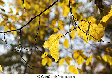 Autumn yellow leaves. Background