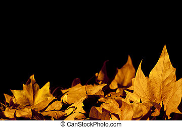 Autumn yellow leaves background with copy space