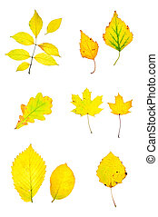 Autumn yellow leaves collection