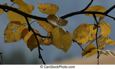Autumn. Yellow leaves.