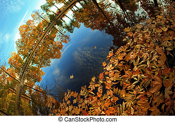 Autumn. Yellow leaves in the lake.