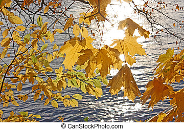 autumn. yellow leaves on a background of water where the reflected rays of the Sun