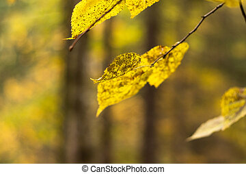 Autumn yellow leaves on blurred background
