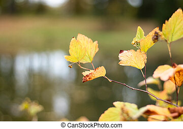 Autumn yellow leaves on blurred background.