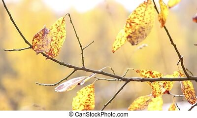 autumn yellow leaves on branches with background blur trees landscape