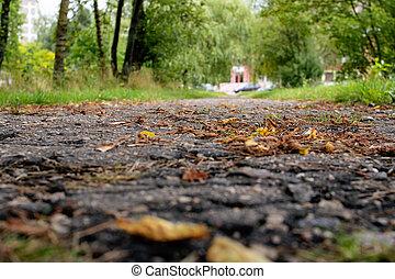 Autumn yellow leaves on the asphalt sidewalk