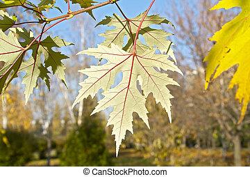 Autumn yellow leaves on tree
