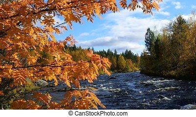 Autumn, yellow leaves, waterfall - Northern autumn on...