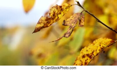 autumn yellow leaves with background blur and sky
