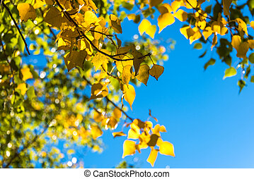 Autumn yellow leaves with blue sky on the background