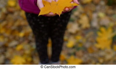 Autumn yellow maple leaf in child hands - Close-up of little...