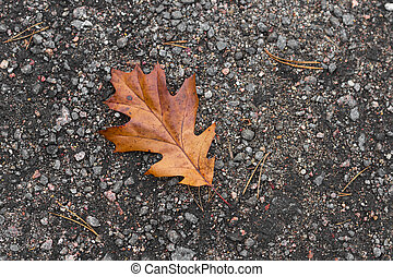 Autumn yellow oak leaves lie on the paving slabs. The leaves of the red oak. Autumn gifts of nature.