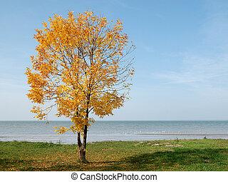 Autumn yellow tree at seaside on blue sky background