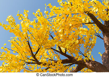 Autumn yellow tree at the blue sky background