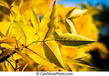 autumn yellow tree with blue sky