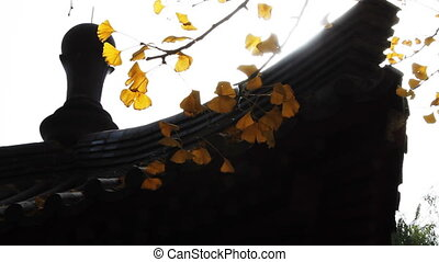 autumn_building_2.mov - maidenhair tree and chinese...