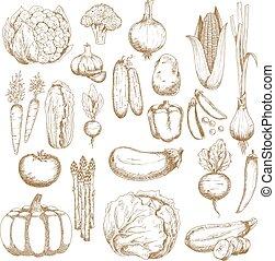 Autumnal abundance of freshly harvested vegetables