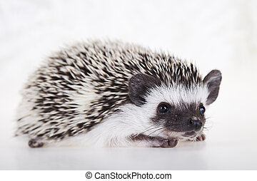 Autumnal animal - Hedgehog - A hedgehog is any of the small ...