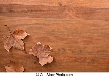 Autumnal background with three dry brown platanus leaves on ...