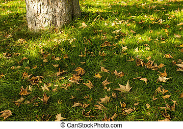 autumnal colored leaves in a green meadow with tree