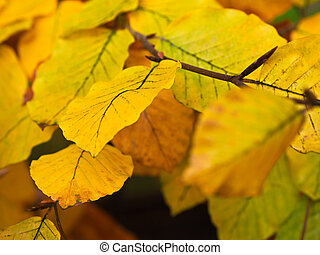 Autumnal colored leaves.