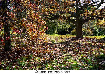 Autumnal Colours in a Sussex Garden