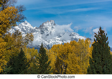 Autumnal Colours in the Grand Teton National Park