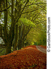 Autumnal Country Lane