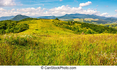autumnal countryside of Carpathian mountains. grassy meadow...