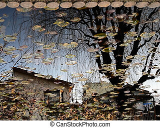 reflection in countryside pond, village house and autumnal tree, Japan