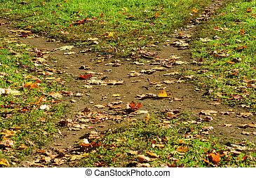 Autumnal crossroad